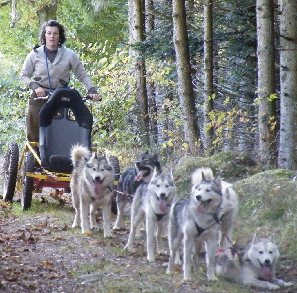 Door de ruige natuur met de hondenslee