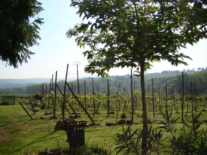 Aux Deux, uitzicht wijngaard