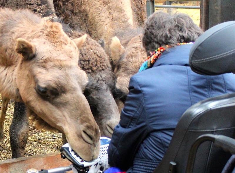 Kamelenboerderij, Linda bij de kamelen