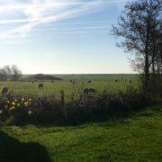 Schipsdune, schaapjes achter de boerderij