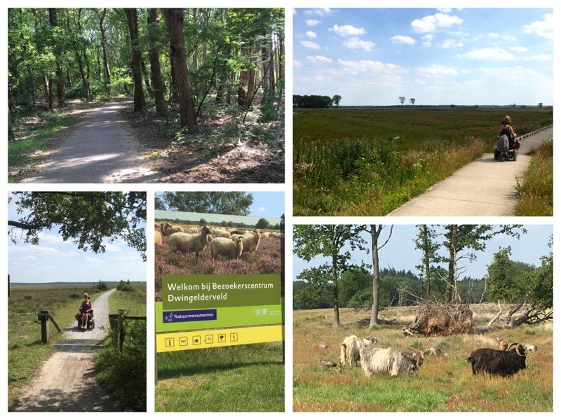 collage van een aantal foto's op het Dwingelderveld