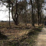 Vrouw loop over een verhard pad onder de bomen waar de late zon doorschijnt