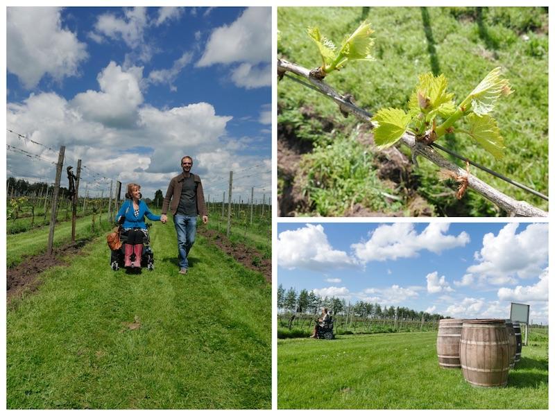 collage van 3 foto's in de wijngaard